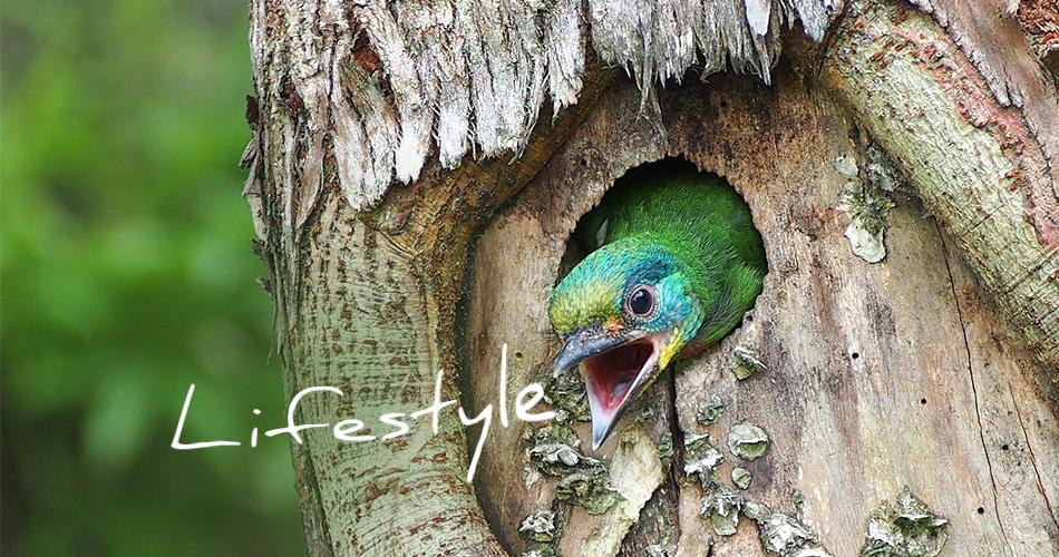 Lifestyle bunter Vogel